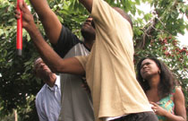 Gallery image from movie. People picking cherries from a cherry tree.